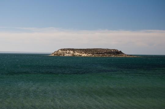 isla pajaros, péninsule de Valdes