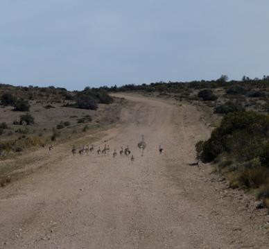 route 1 vers Camarones