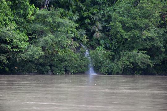 forêt amazonienne et le Rio Napo