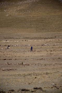 "notre bergère ""hay nada"" .."