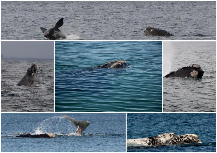 baleines-valdes.jpg