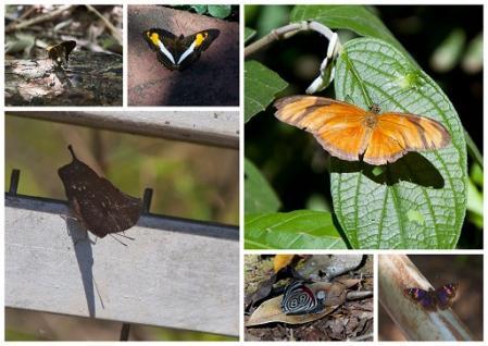 iguazu-papillons-1.jpg