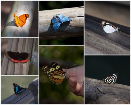 iguazu-papillons-2.jpg
