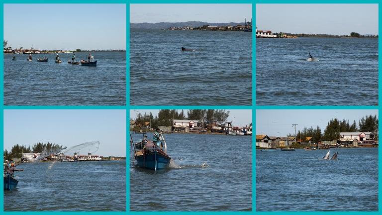 peche-avec-les-dauphins-2.jpg